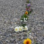 Blumen auf Kies